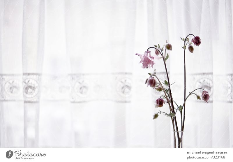 Old Plant Flower Sadness Life Senior citizen Emotions Moody Dream Flat (apartment) Living or residing Contentment Decoration Esthetic Kitsch Bouquet