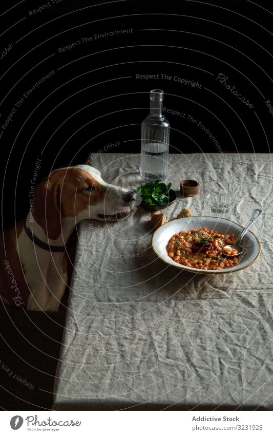 Cute dog sitting by table with served meal hungry food obedient dinner pet animal desire patience purebred domestic canine plate lunch beans greenery craving
