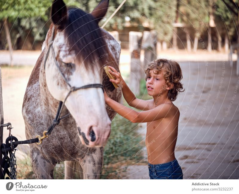 Glad kid taking care of stallion in summer boy horse groom ranch content friend brush jeans farm stable countryside hygiene love child hobby equestrian bonding