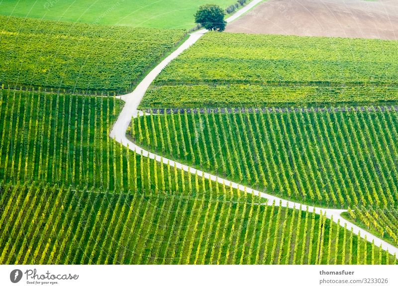 Path through vineyard - up or down Trip Far-off places Summer Sun Mountain Vineyard Wine growing Nature Landscape Beautiful weather Tree Agricultural crop Field
