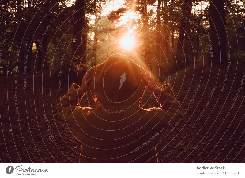 Person watching sunset in autumn forest person sunrise hood tranquil solitude dawn calm sunbeam dusk quiet silence freedom enjoy serenity peaceful nature