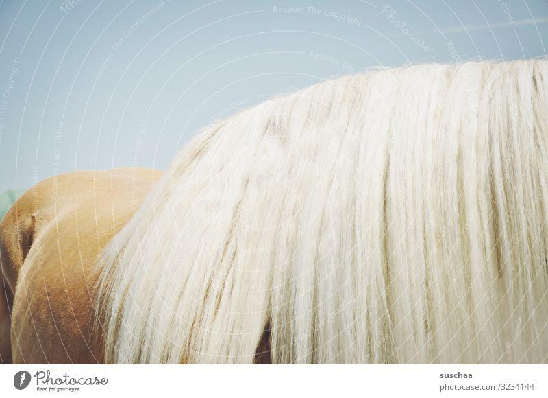 much mane Horse Horseback Mane hair horse hair Pelt Lush Sky Ride Sports Love of animals Animal care Barn Farm Agriculture