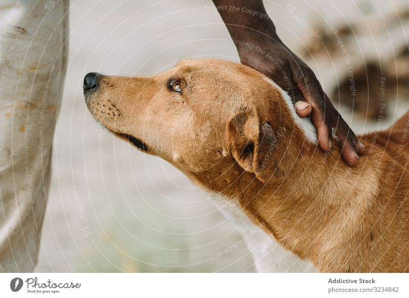 Crop black person petting dog stray street poor stroke town gambia homeless city animal canine mammal mongrel tender care support friend fur abandoned domestic