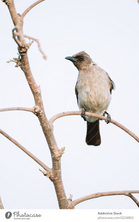 Bright bird sitting on twig branch forest bright gambia fauna nature species environment animal feather wildlife feathers plumage nobody tree vivid vibrant