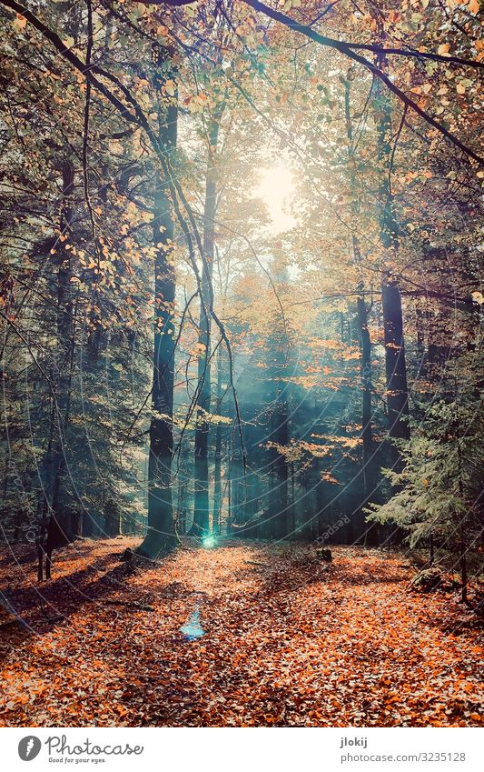 autumnal Nature Plant Sun Autumn Tree Wild plant Deciduous forest foliage Branch Twig Seasons Forest Relaxation Idyll Transience Growth Change Colour photo