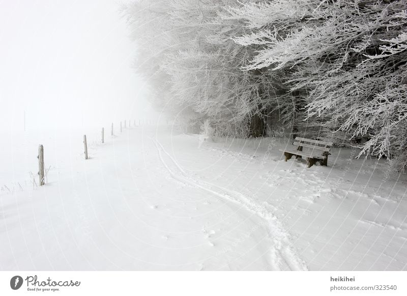 winter Vacation & Travel Trip Far-off places Freedom Winter Snow Winter vacation Sports Skiing Environment Nature Landscape Weather Bad weather Fog Ice Frost