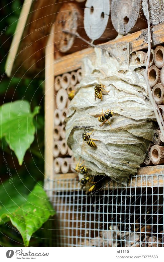 Green Wood Brown Gray Wild animal Group of animals Protection Insect Environmental protection Farm animal Diligent Wasps Love of nature Resident Antagonism
