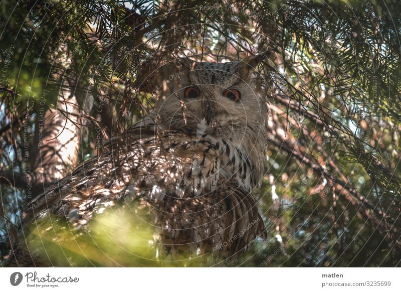 mimicry Plant Animal Summer Tree Bird 1 Dark Brown Green Eagle owl Hidden Camouflage Colour photo Exterior shot Close-up Pattern Deserted Copy Space left