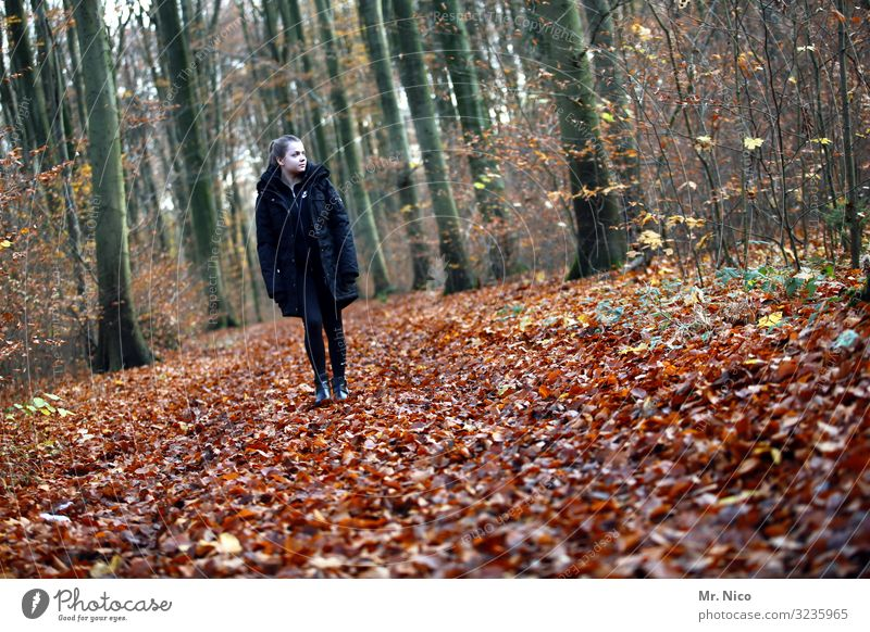 Ranger Leisure and hobbies Vacation & Travel Hiking Feminine Young woman Youth (Young adults) 1 Human being 18 - 30 years Adults Environment Nature Autumn Tree