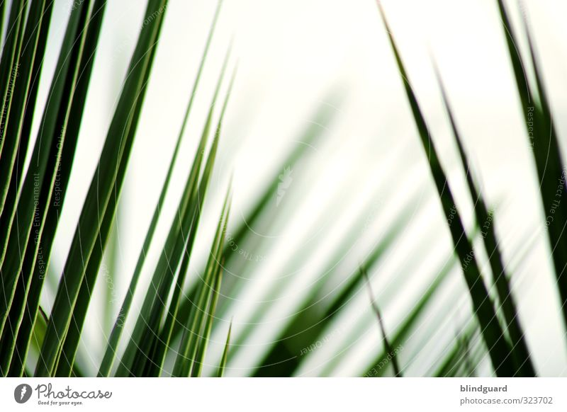 Nature Green White Plant Calm Black Grass Contentment Tourism Growth Trip Simple Hope Agriculture Wellness Thin