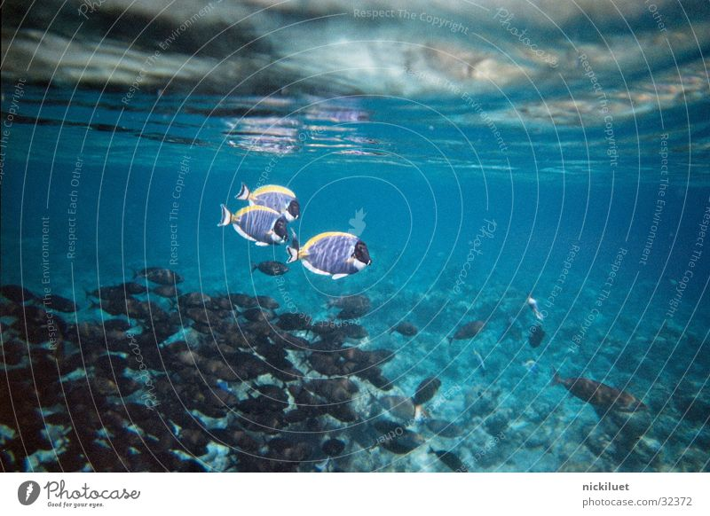 Water Transport Fish Underwater photo Maldives Finding Nemo