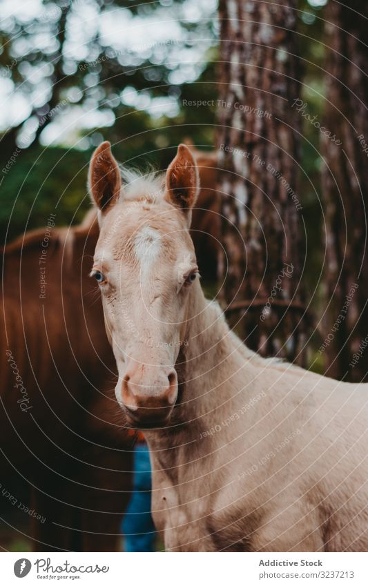Horse on walk tied to tree and looking at camera horse grazing foal strong pasture mammal animal nature farm rural herd meadow wild domestic freedom scenic