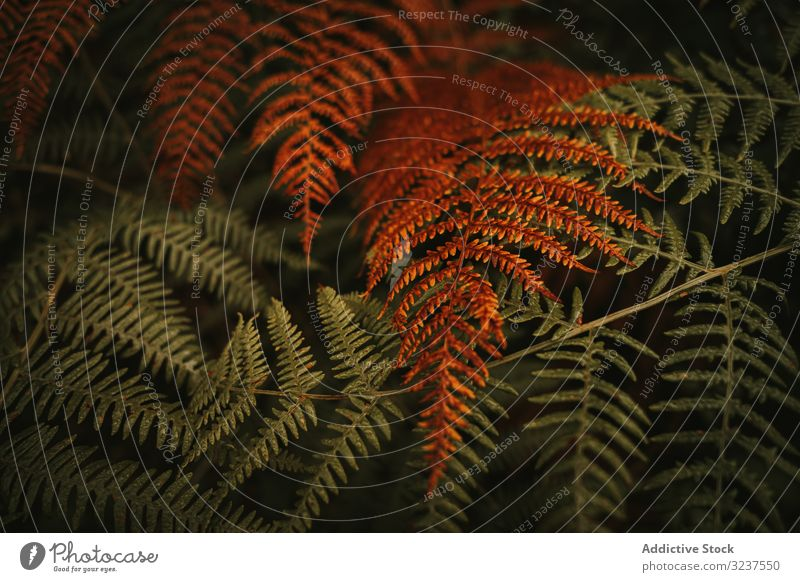 Green and brown fern fronds in autumn garden bush leaf forest green orange fresh floral nature foliage shrub perennial wilted herbaceous dry environment huge