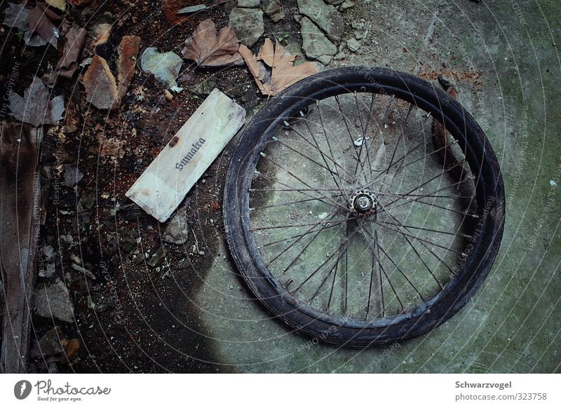 Bike - Travel to Sumatra Wheel Bicycle tyre Ground Rust Old Derelict Urbex foliage head cinema Decline Forget Transience