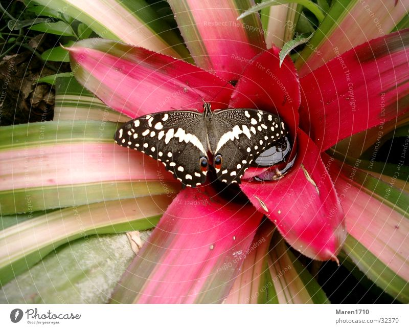 butterfly flower Butterfly Flower Cactus Animal Garden Nature
