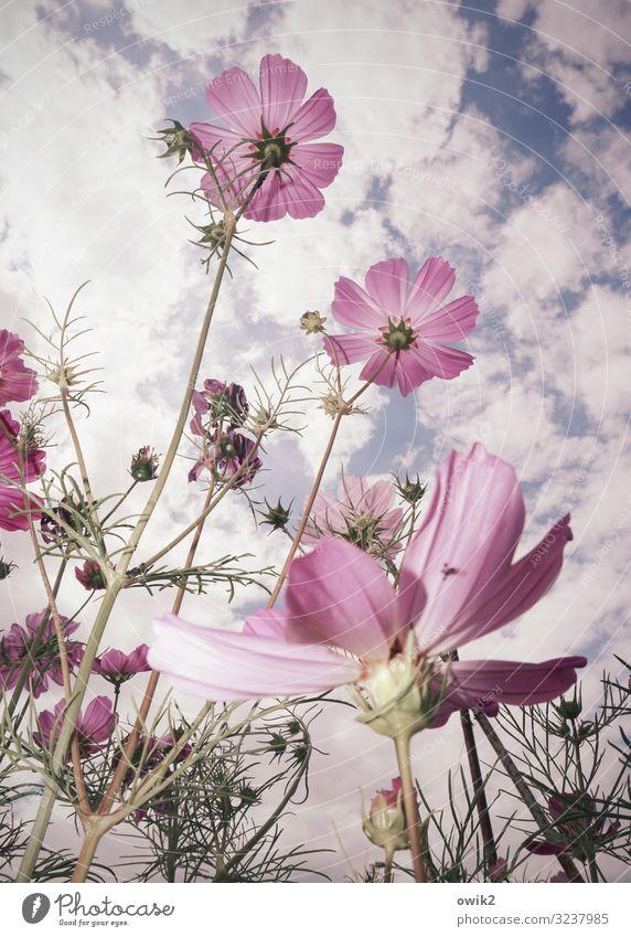 Sky Nature Summer Plant Flower Clouds Environment Blossom Meadow Movement Garden Bright Air Growth Idyll Joie de vivre (Vitality)