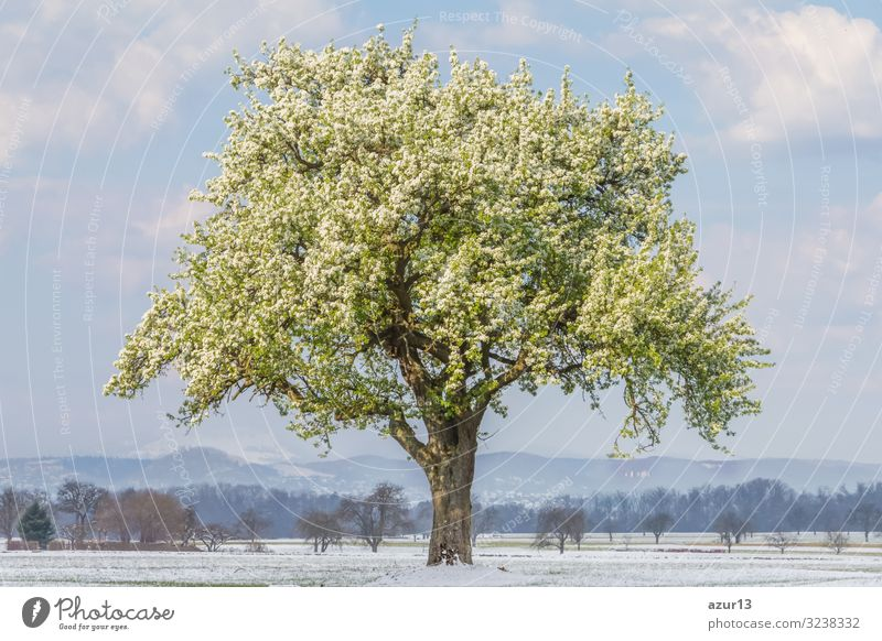 Climate change scene of spring summer tree in winter landscape Healthy Calm Environment Nature Landscape Spring Summer Winter Weather Beautiful weather