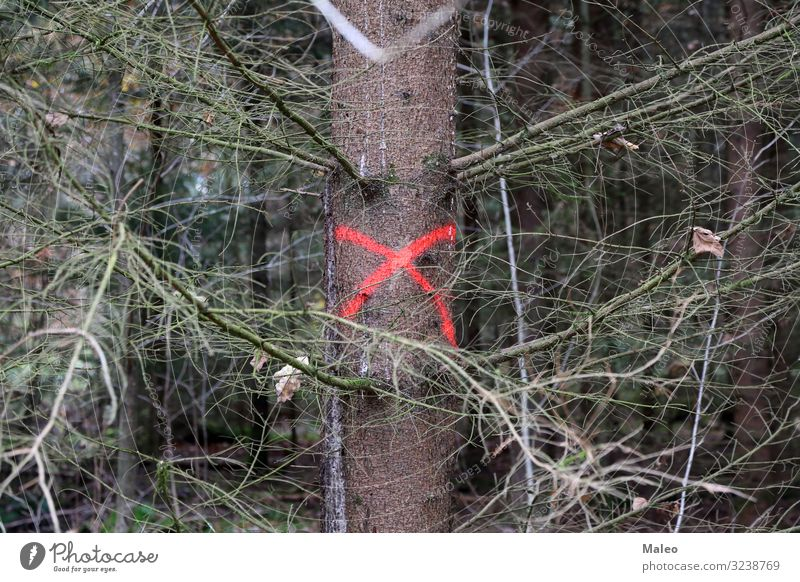 A tree in the forest is marked Autumn Crucifix Logging Ecological Vicinity Environment Leaf Forest Management Forestry Green Industry Wood Label Tree Nature