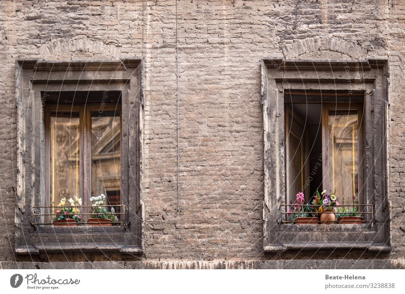 Windows decorated with flowers in the old town quarter flower decoration window decoration Old building reflection allure House (Residential Structure)