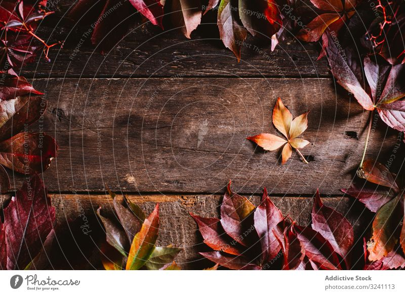Orange and red autumn leaves on wooden surface foliage layout background detail composition abstract empty frame clear arrangement blank fall nature texture