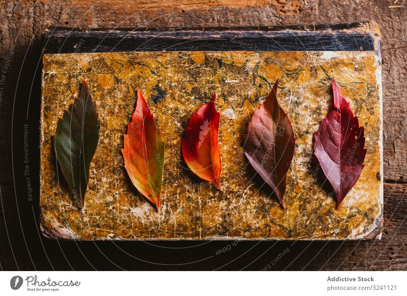 Autumn leaves on old book on wooden surface vintage autumn reading nostalgia rustic fall foliage nature aged natural yellow orange tree red paper colorful plant