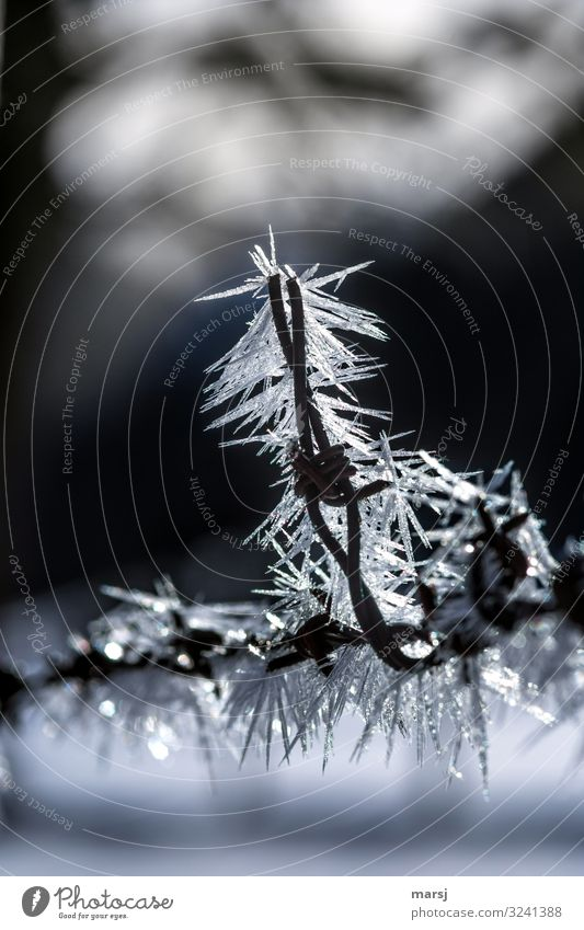 Winter Exceptional Decoration Ice Esthetic Threat Frost Frozen Crystal Ice crystal