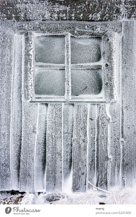 Pure cold Winter Ice Frost Snow Hut Wall (barrier) Wall (building) Window Wooden wall Cold Natural Loneliness Exhaustion Lattice window Frozen Cold shock