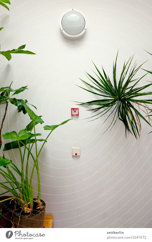 Plant House (Residential Structure) Wall (building) Copy Space Lamp Living or residing Room Stairs Fire Blaze Apartment Building Staircase (Hallway) Palm tree