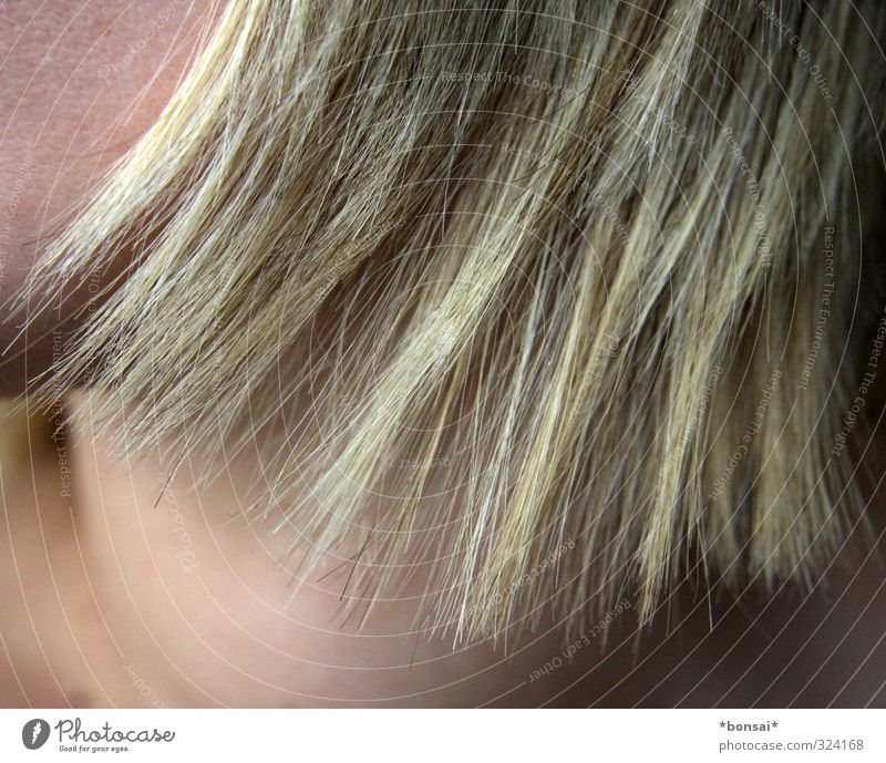 Freshly cut Beautiful Hair and hairstyles Feminine 1 Human being Blonde Growth Point Tip of the hair Hair colour Colour Colour photo Interior shot Detail Day