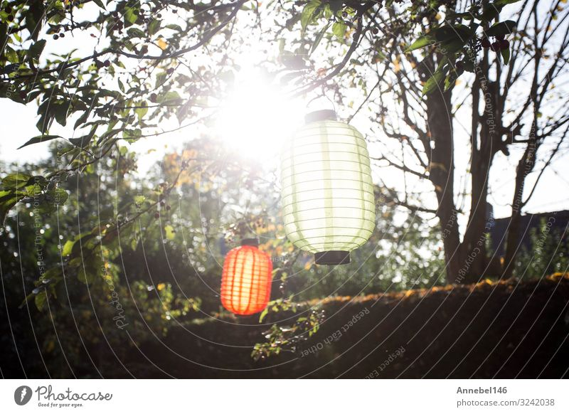 Beautiful colorful lanterns hanging on the trees with sunlight Vacation & Travel Summer Garden Decoration Lamp Feasts & Celebrations Art Culture Nature Plant