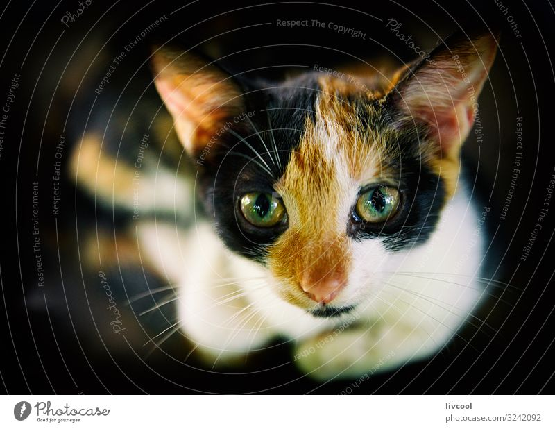 cute cat in the dark , cuba Lifestyle Animal Pet Cat 1 Love Sit Authentic Cool (slang) Dark Uniqueness Cute Brown Black White Loneliness Cuba Lovely eyes mascot