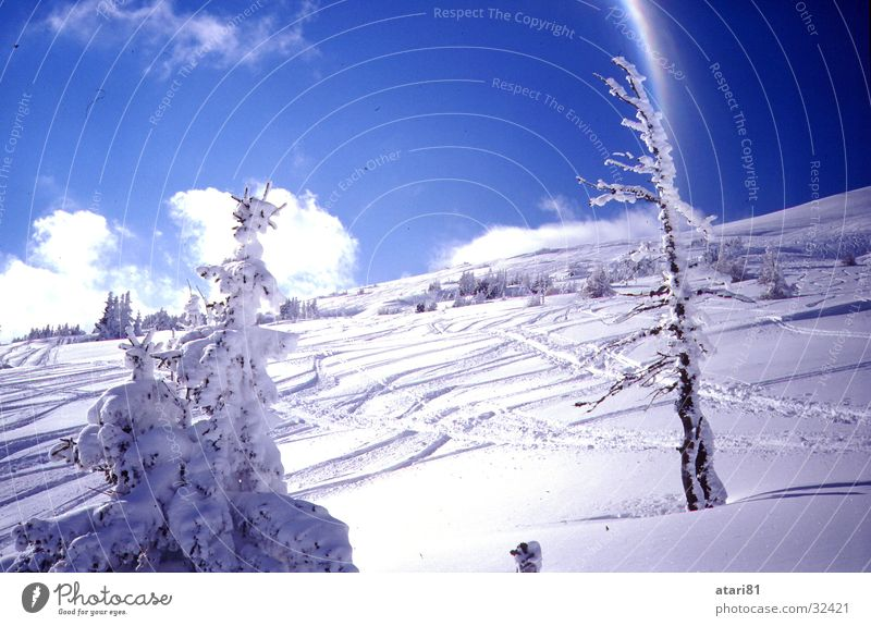 dirty slope Tree Fir tree Clouds Snow Mountain Skiing freeride Blue Sky Snow track Ski resort Ski run Beautiful weather Blue sky Deep snow