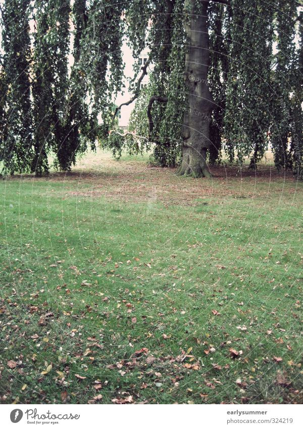 Nature Green Plant Tree Leaf Cold Environment Meadow Sadness Autumn Gray Garden Park Gloomy Climate Grief