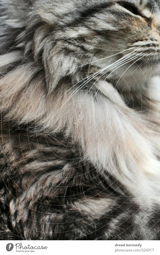 kitten Animal Pet Cat 1 Near Kitten Pelt Eyes Beautiful Close-up Subdued colour Exterior shot Pattern Structures and shapes Copy Space left Copy Space right