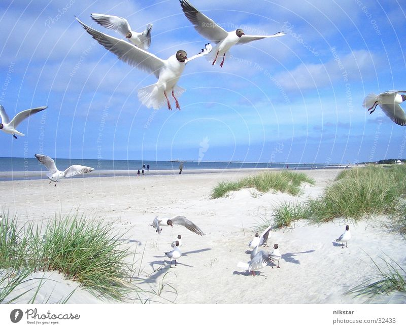 Sky Blue Beach Bird Flying Free Baltic Sea Seagull