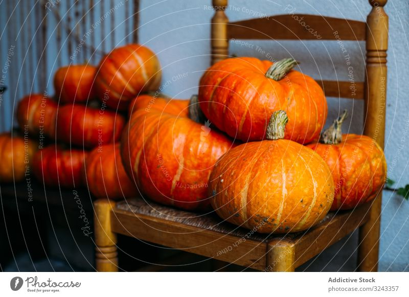 Shiny orange pumpkins composed on chairs harvest autumn fall vibrant holiday arrangement collection crop agriculture fresh carving detox halloween healthy