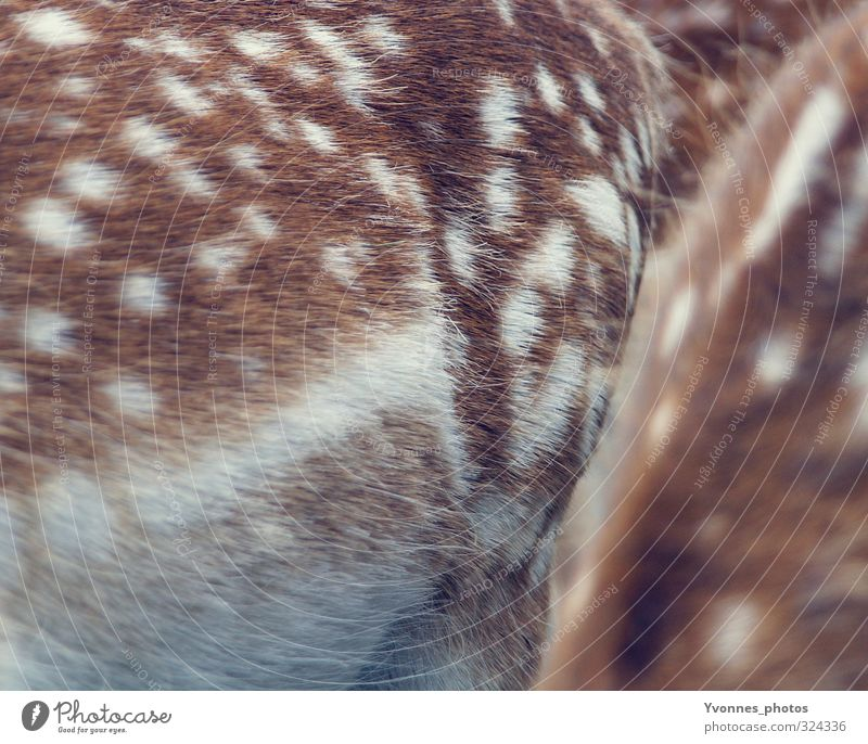 Bambi Animal Wild animal Zoo 2 Together Love of animals Roe deer Fawn Pelt Spotted Colour photo Subdued colour Exterior shot Close-up Detail Copy Space bottom