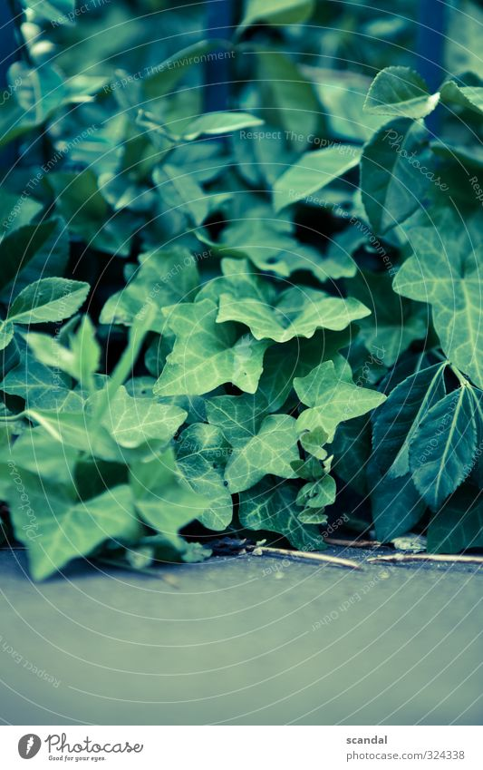 Plant Green Nature Summer Emotions Calm Contentment Lignano Colour photo Exterior shot Detail Day Light Shallow depth of field flowers Stalk Blossom leave