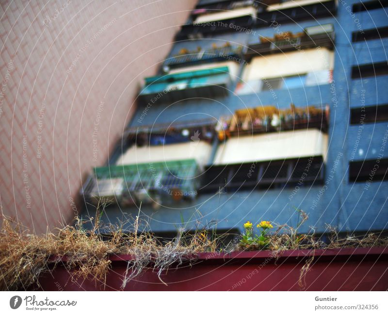Blue City Green Red House (Residential Structure) Black Yellow Window Wall (building) Brown High-rise Asia Balcony Shriveled Port City Outskirts