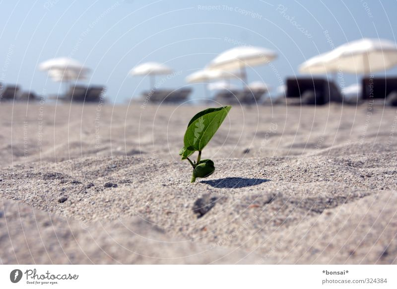 Nature Vacation & Travel Plant Summer Sun Relaxation Leaf Beach Life Warmth Natural Small Exceptional Bright Sand Growth
