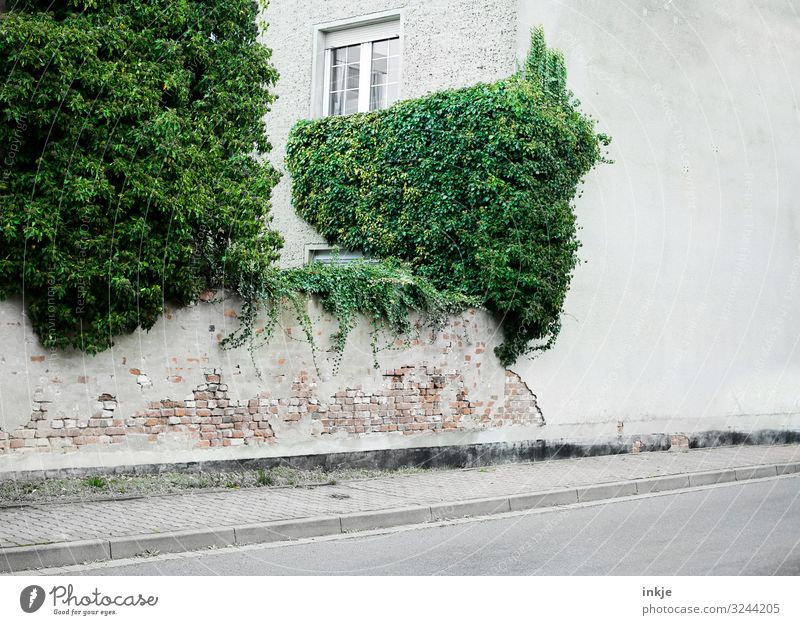 Summer Town Green House (Residential Structure) Winter Window Street Autumn Wall (building) Spring Natural Building Wall (barrier) Facade Growth Gloomy