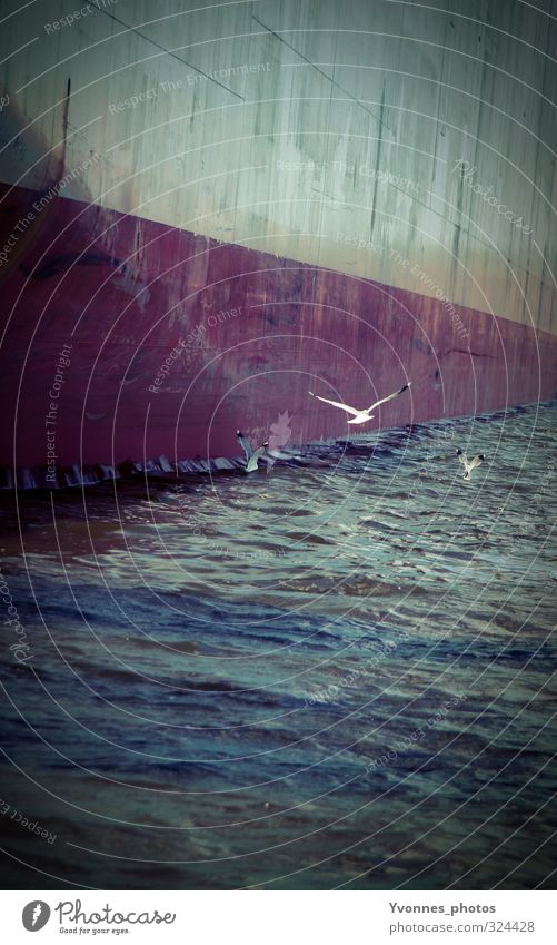 Ocean Dark Wall (building) Environment Free Waves Hamburg Harbour Navigation Seagull Climate change Port City Inland navigation Container ship Oil tanker
