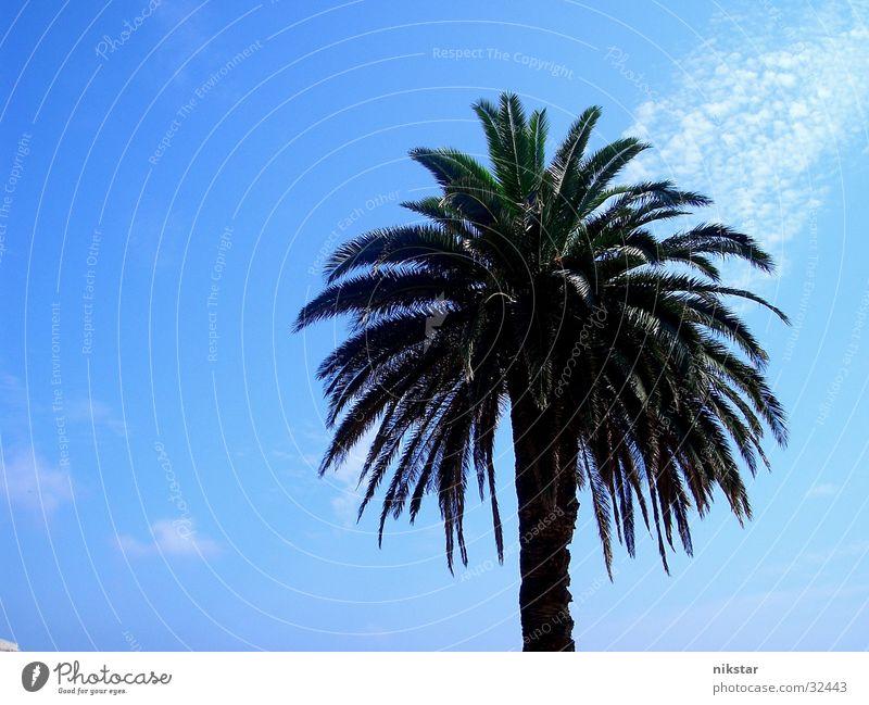 la palm Palm tree Beach Summer Plant Tree Green Leaf Sun Blue Sky Beautiful weather Tree trunk