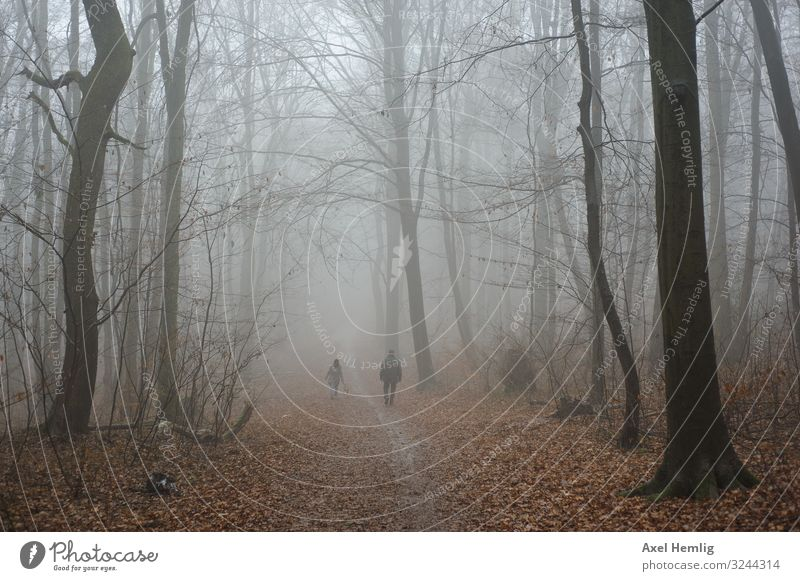 mist walk Winter Forest Human being Adults 2 Fog Relaxation Going Grief Lanes & trails Colour photo Subdued colour Exterior shot Day