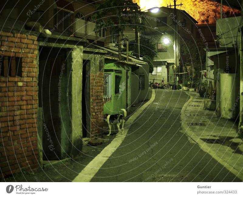 Dog Old Green White Tree Animal Yellow Street Brown Fear Asia Derelict Decline Lantern Brick Pavement