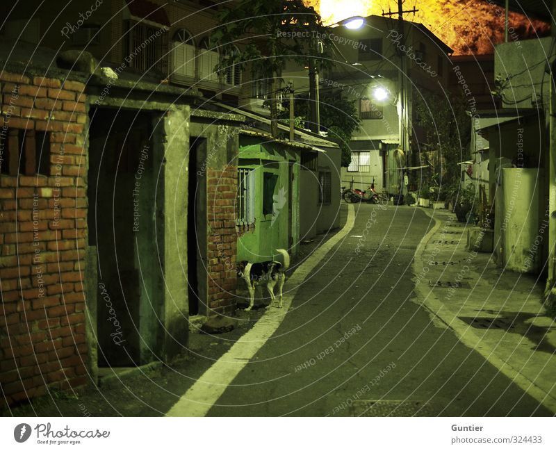 nightlife Asia Brown Yellow Green White Alley Brick construction Dog Animal 1 Lantern Shack Old Derelict Decline Tree Gully Narrow Pavement Street Fear