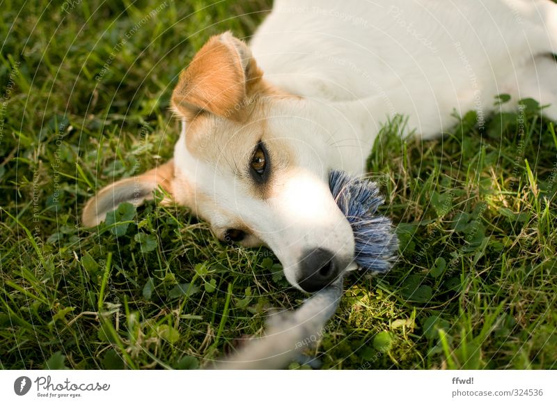 Camilla Leisure and hobbies Playing Garden Nature Grass Meadow Animal Pet Dog Animal face 1 Relaxation Lie Green White Contentment Joie de vivre (Vitality)