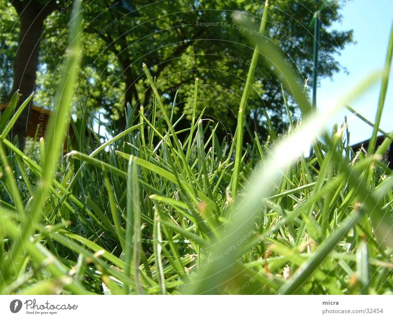 Tree Green Meadow Grass Garden Lawn