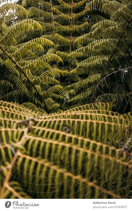 Green exotic frond at forest fern nature fiddle heads maidenhair leaf greenery foliage lush plant species tropical botany fresh growing rainforest wilderness