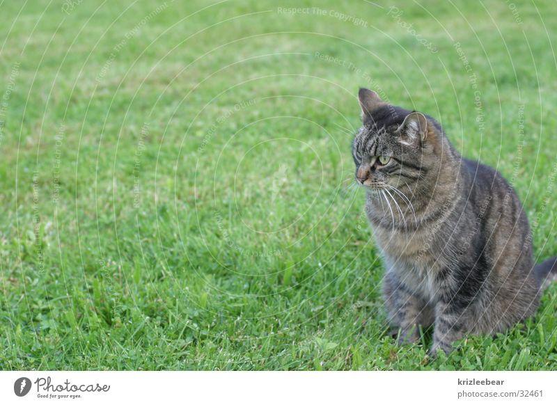 Green Meadow Cat Soft Pelt Cuddly Tuft
